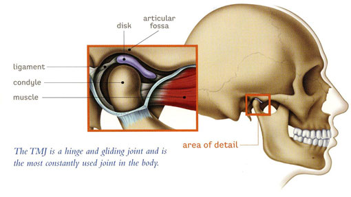 TMJ therapy - Thornhill Dentist - Illustration